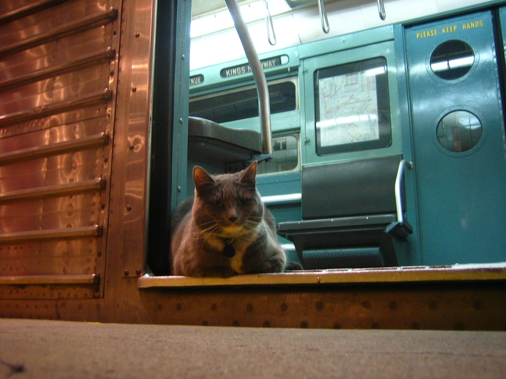 Cat on MTA Vintage Rolling Stock